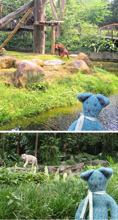 Erwin Singapore Zoo